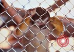 Image of LSD experiments animal testing San Francisco California USA, 1968, second 39 stock footage video 65675021680