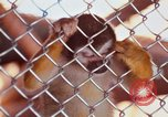 Image of LSD experiments animal testing San Francisco California USA, 1968, second 40 stock footage video 65675021680