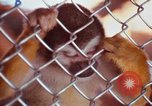 Image of LSD experiments animal testing San Francisco California USA, 1968, second 42 stock footage video 65675021680