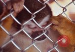 Image of LSD experiments animal testing San Francisco California USA, 1968, second 43 stock footage video 65675021680