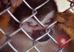 Image of LSD experiments animal testing San Francisco California USA, 1968, second 44 stock footage video 65675021680