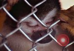 Image of LSD experiments animal testing San Francisco California USA, 1968, second 45 stock footage video 65675021680