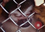 Image of LSD experiments animal testing San Francisco California USA, 1968, second 46 stock footage video 65675021680