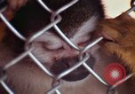 Image of LSD experiments animal testing San Francisco California USA, 1968, second 47 stock footage video 65675021680