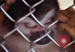 Image of LSD experiments animal testing San Francisco California USA, 1968, second 48 stock footage video 65675021680