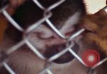 Image of LSD experiments animal testing San Francisco California USA, 1968, second 49 stock footage video 65675021680