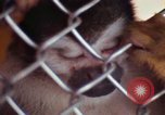 Image of LSD experiments animal testing San Francisco California USA, 1968, second 50 stock footage video 65675021680