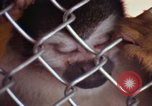 Image of LSD experiments animal testing San Francisco California USA, 1968, second 51 stock footage video 65675021680