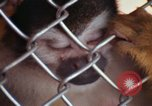Image of LSD experiments animal testing San Francisco California USA, 1968, second 52 stock footage video 65675021680