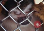 Image of LSD experiments animal testing San Francisco California USA, 1968, second 53 stock footage video 65675021680