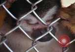 Image of LSD experiments animal testing San Francisco California USA, 1968, second 54 stock footage video 65675021680