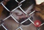 Image of LSD experiments animal testing San Francisco California USA, 1968, second 55 stock footage video 65675021680