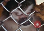 Image of LSD experiments animal testing San Francisco California USA, 1968, second 57 stock footage video 65675021680