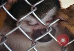 Image of LSD experiments animal testing San Francisco California USA, 1968, second 58 stock footage video 65675021680