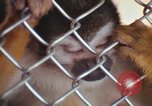 Image of LSD experiments animal testing San Francisco California USA, 1968, second 59 stock footage video 65675021680