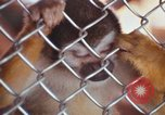 Image of LSD experiments animal testing San Francisco California USA, 1968, second 60 stock footage video 65675021680