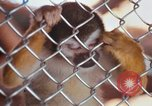 Image of LSD experiments animal testing San Francisco California USA, 1968, second 61 stock footage video 65675021680