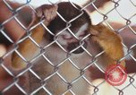 Image of LSD experiments animal testing San Francisco California USA, 1968, second 62 stock footage video 65675021680