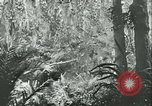 Image of World War II amphibious assault in Pacific Pacific Theater, 1944, second 49 stock footage video 65675021727