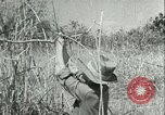 Image of Office of Strategic Services Burma, 1943, second 41 stock footage video 65675021895