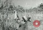 Image of Office of Strategic Services Burma, 1943, second 44 stock footage video 65675021895