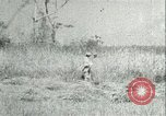 Image of Office of Strategic Services Burma, 1943, second 45 stock footage video 65675021895
