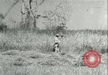 Image of Office of Strategic Services Burma, 1943, second 46 stock footage video 65675021895