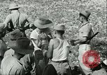 Image of Office of Strategic Services Burma, 1943, second 35 stock footage video 65675021897