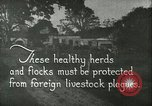 Image of foot and mouth disease United States USA, 1925, second 5 stock footage video 65675022112