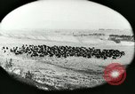 Image of foot and mouth disease United States USA, 1925, second 19 stock footage video 65675022112