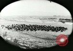 Image of foot and mouth disease United States USA, 1925, second 21 stock footage video 65675022112