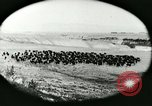 Image of foot and mouth disease United States USA, 1925, second 22 stock footage video 65675022112