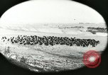 Image of foot and mouth disease United States USA, 1925, second 25 stock footage video 65675022112
