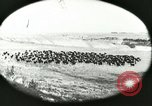 Image of foot and mouth disease United States USA, 1925, second 27 stock footage video 65675022112