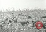 Image of foot and mouth disease United States USA, 1925, second 33 stock footage video 65675022112