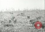 Image of foot and mouth disease United States USA, 1925, second 34 stock footage video 65675022112