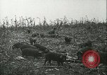 Image of foot and mouth disease United States USA, 1925, second 37 stock footage video 65675022112