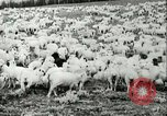 Image of foot and mouth disease United States USA, 1925, second 39 stock footage video 65675022112