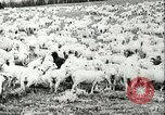 Image of foot and mouth disease United States USA, 1925, second 40 stock footage video 65675022112