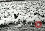 Image of foot and mouth disease United States USA, 1925, second 41 stock footage video 65675022112