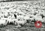 Image of foot and mouth disease United States USA, 1925, second 43 stock footage video 65675022112