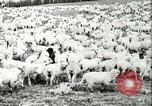 Image of foot and mouth disease United States USA, 1925, second 44 stock footage video 65675022112
