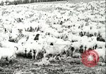 Image of foot and mouth disease United States USA, 1925, second 46 stock footage video 65675022112