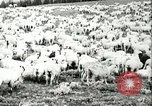 Image of foot and mouth disease United States USA, 1925, second 47 stock footage video 65675022112