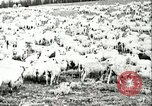 Image of foot and mouth disease United States USA, 1925, second 48 stock footage video 65675022112