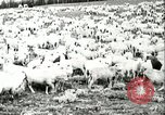 Image of foot and mouth disease United States USA, 1925, second 49 stock footage video 65675022112
