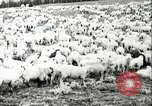 Image of foot and mouth disease United States USA, 1925, second 50 stock footage video 65675022112