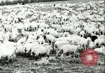 Image of foot and mouth disease United States USA, 1925, second 51 stock footage video 65675022112
