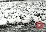 Image of foot and mouth disease United States USA, 1925, second 52 stock footage video 65675022112