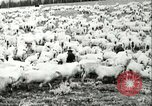 Image of foot and mouth disease United States USA, 1925, second 53 stock footage video 65675022112